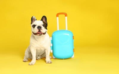 Travel with Your Pup